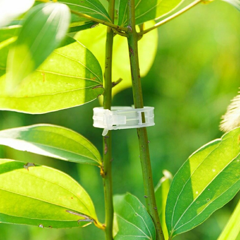 50 pcs Tomato and Veggie Garden Plant Support Clips for Trellis Twine Greenhouse